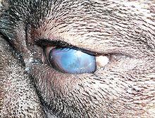kurze ohnmacht im alter hund